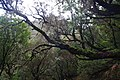 2012-10-27 13-03-23 Pentax JH (49284002227).jpg