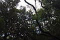 2012-10-27 13-07-03 Pentax JH (49283794306).jpg