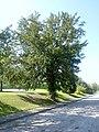 2014.09.08 - Neuhofen an der Ybbs - Eibe - 01.jpg