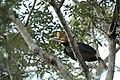 2014 Borneo Luyten-De-Hauwere-Bird-06.jpg