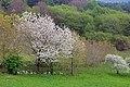 2017-04-10 04-14 Gardasee 065 Malcesine, Monte Baldo (34208117762).jpg