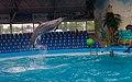2017-05-16 Show in Kyiv Dolphinarium 19.jpg