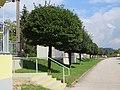 2017-09-21 (194) Rows of trees at Bahnhof Greinsfurth.jpg