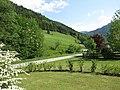 2018-05-13 (241) Nature near Bichlhäusl in Frankenfels, Austria.jpg