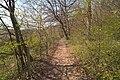 20210417 Naturschutzgebiet Wolferskopf 05.jpg