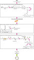 2513 The Breakdown of Fatty Acids.jpg