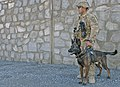 25th Infantry Division private guarding Combat Outpost Achin perimeter with military working dog US Army 111105-A-ZU930-003.jpg