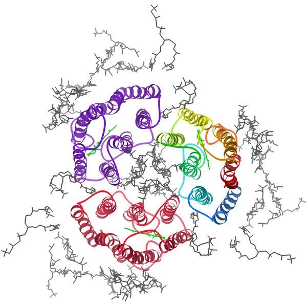 File:2brd bacteriorhodopsin biolU rib top.tiff