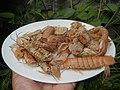 4087Ants Common houseflies foods delicacies of Bulacan 05.jpg