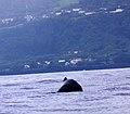 Açores 2010-07-21 (5117821295).jpg