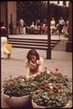 A CBS SECRETARY USES HER LUNCHBREAK TO HELP PLANT FLOWERS AT ENTRANCE TO PALEY PARK, A GIFT TO THE CITY FROM CBS... - NARA - 551705.tif