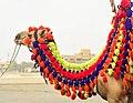 A Camel on the Beach.jpg