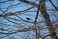 A bird chillin' out. A chickadee maybe^ No idea - panoramio.jpg