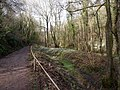 A footpath through Snowdrop Valley, North Hawkswell Wood - geograph.org.uk - 1718978.jpg