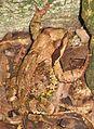 A frog near a stone2.JPG