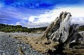A rugged coastline.NZ (16779604747).jpg
