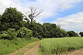 Abbess Beauchamp and Berners Roding, Essex England - field and track.JPG