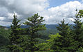 Abies fraseri Picea rubens Grandfather Mountain.jpg