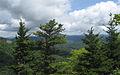 Abies fraseri Picea rubens Grandfather Mountain.jpg