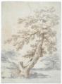 Abraham Genoels - Study of a tree.tiff