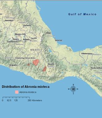 Abronia mixteca - Range of Abronia mixteca