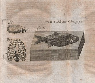 Johann Jakob Scheuchzer - Illustration of critique of Piscium querelae et vindiciae published in Acta Eruditorum, 1709