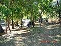 Adel's Grove - panoramio (1).jpg