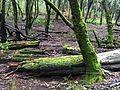 Adentros del bosque en el Parque Nacional Desierto de los Leones.jpg