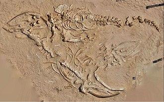 Cerro Ballena - Image: Adult and juvenile fossil rorqual skeletons from Cerro Ballena Proc R Soc B 281 20133316 4 c