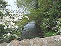 Afon Braint upstream from the bridge - geograph.org.uk - 807930.jpg