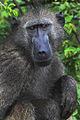 Africa Safari 017 (5302659572).jpg