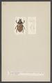 Agaocephala - Print - Iconographia Zoologica - Special Collections University of Amsterdam - UBAINV0274 001 06 0039.tif