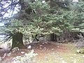 Ainos-forest.JPG