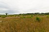 Albany Sand Prairie and Oak Savanna.jpg