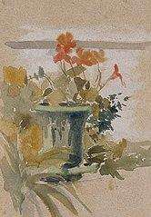 Pelargoniums on the Terrace