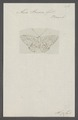 Alesa - Print - Iconographia Zoologica - Special Collections University of Amsterdam - UBAINV0274 049 18 0015.tif