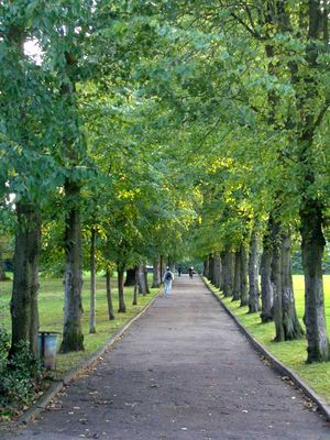 Alexandra Park, London - An avenue in the park lined with lime trees