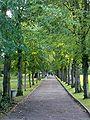 Alexandra park avenue.jpg