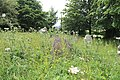 All Saints Church, Nazeing, Essex, England ~ churchyard overgrown stones at east.JPG