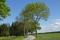 Allee entlang der LH 61 bei Heinreichs 2014-05 02 NÖ-Naturdenkmal WT-062.jpg