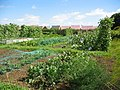 Allotment gardens on Leicester Road, Uppingham - geograph.org.uk - 45208.jpg