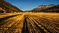 Alps of Switzerland Sils in the Evening Sun (23950156283).jpg