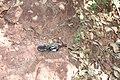 Alto Araguaia - State of Mato Grosso, Brazil - panoramio (181).jpg