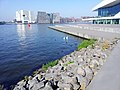Amsterdam Noord 09 2014 - panoramio (1).jpg
