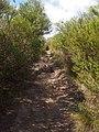 Anice Falls Track - panoramio (2).jpg