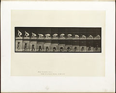 Animal locomotion. Plate 479 (Boston Public Library).jpg