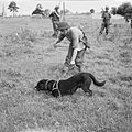 Animals in War 1939-1945 B6501.jpg