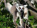 Anja réserve (Madagascar) - 07.JPG