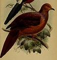 Annali del Museo civico di storia naturale di Genova (1886) (18406786452) (cropped).jpg
