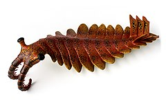240px anomalocaris canadensis   reconstruction   muse